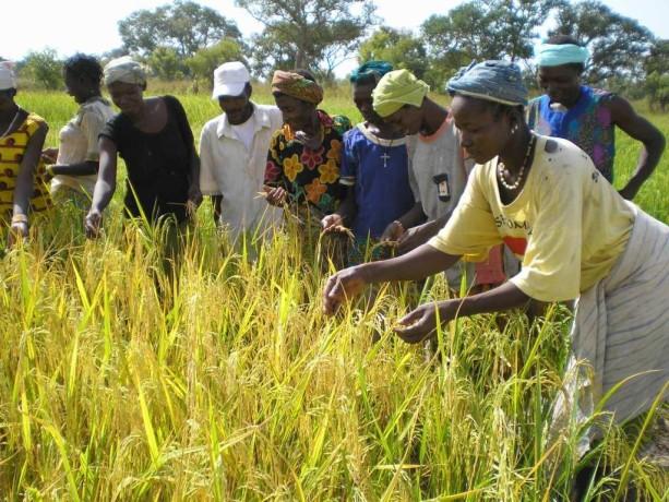 Campagne agricole 2014 2015 l espoir est permis dans la for Permis agricole